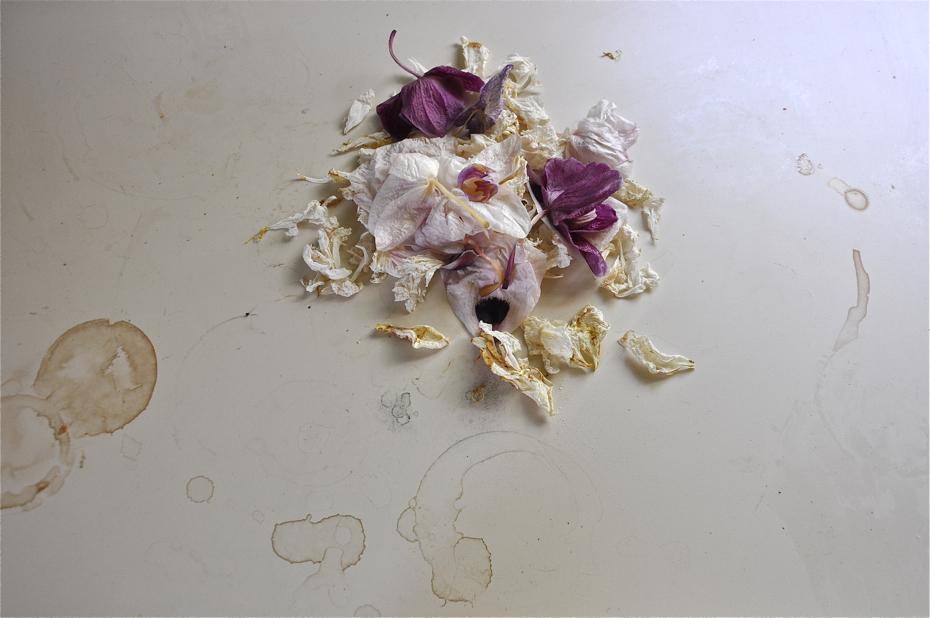 flowerdetritus